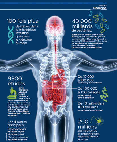 Microbiote et comportement humain : un lien ?